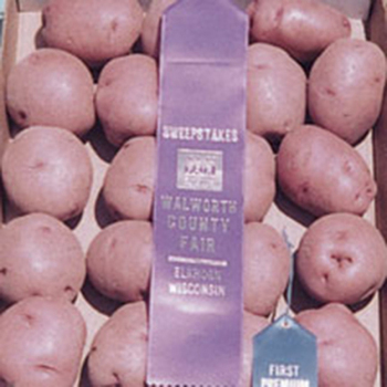 Red Norland Potatoes