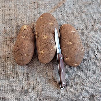 Norkotah Russet Potatoes