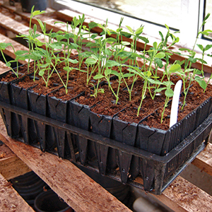 Rootrainer Growing Systems
