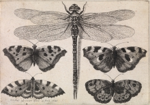 etching of dragonflys and butterflys