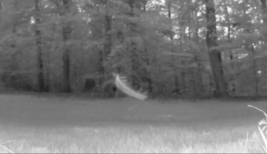 "What appears to be a ""flying centipede"" is actually a mosquito flying in front of a security camera"