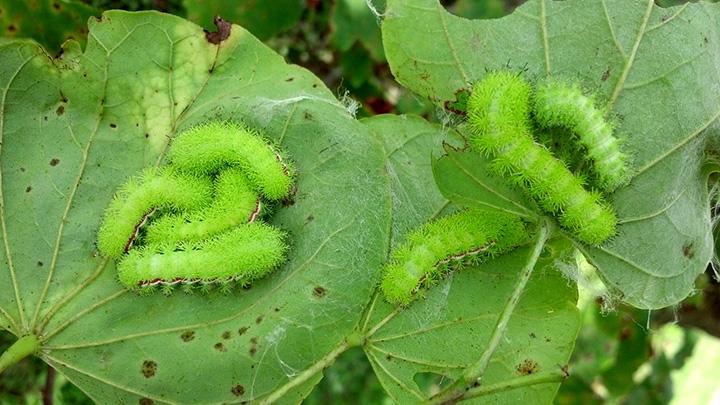Stinging Caterpillars Community Idea Stations