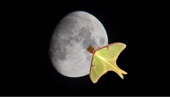 moth with moon in background