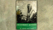 Grassroot Jungles