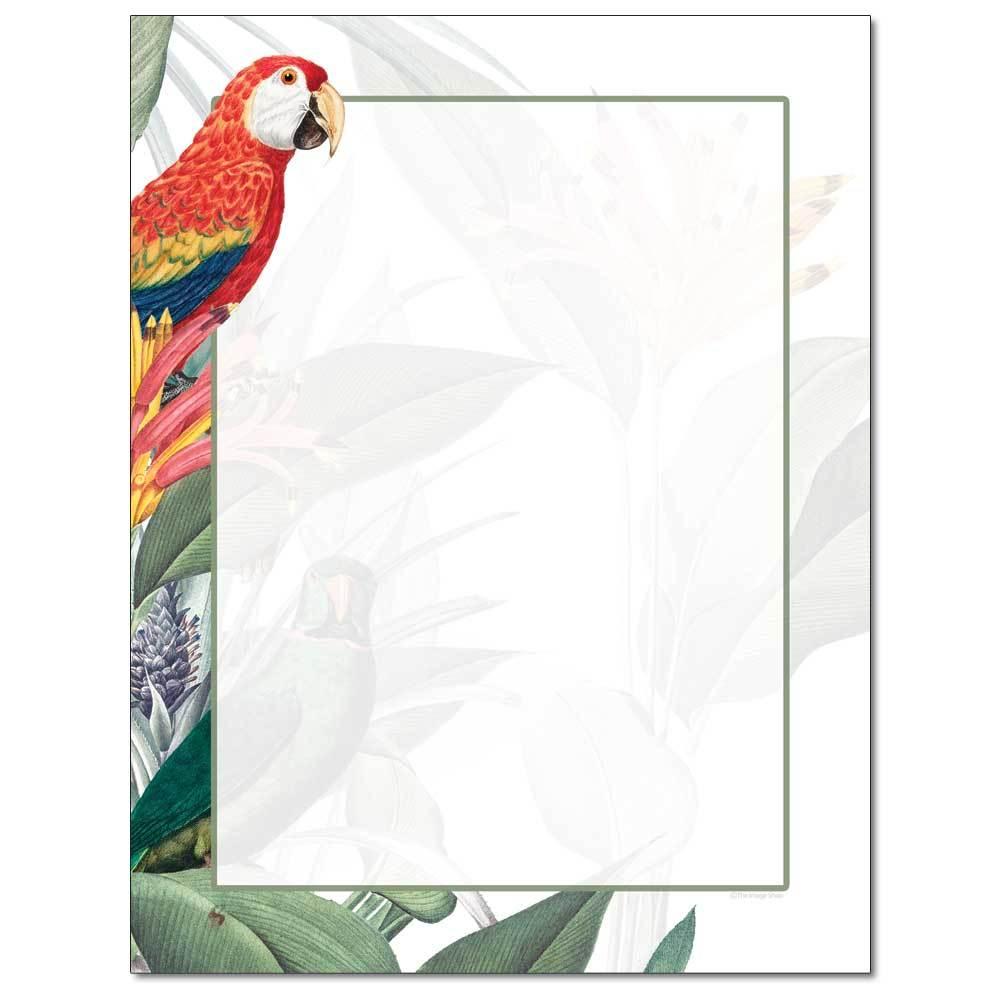 Jungle Birds Letterhead