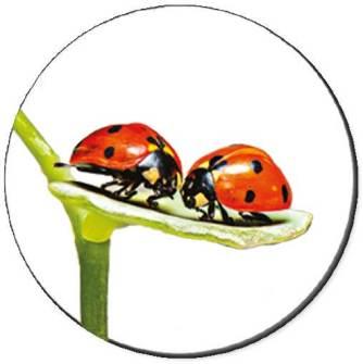 Ladybug Luv Seals