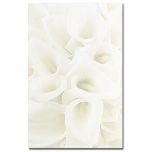 White Calla Lilies Bifold Brochure