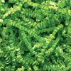 Spring-Fill crinkle Cut 10 lb. - Lime Green