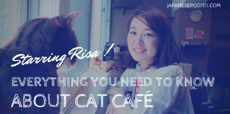 everything you need to know about cat cafe in japan tokyo