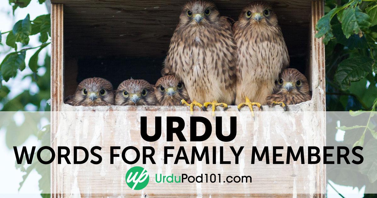 Learn Urdu