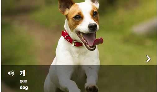 개 (gae): dog