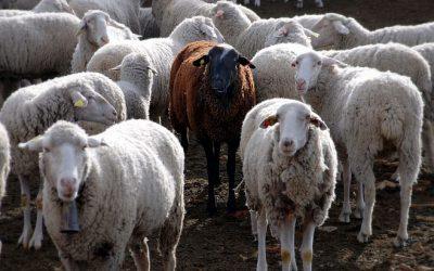 Blah, Blah, Black Sheep – Mother Goose's Modern Guide to Blogging