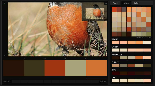 Robin Red Breast - color palette
