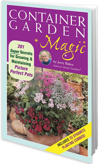 Container Garden Magic