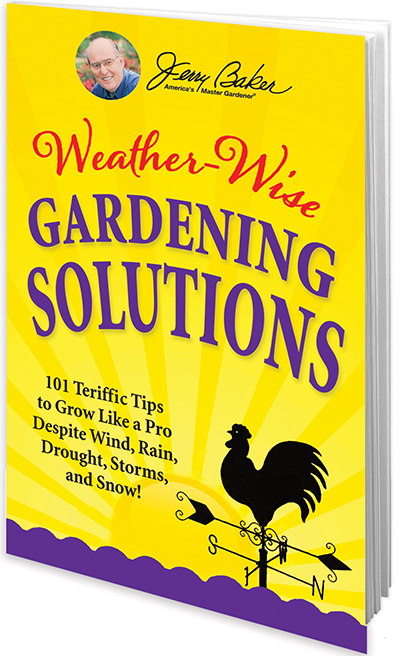 Weather-Wise Gardening Solutions