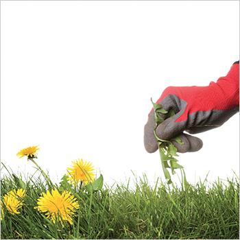 2. Make weeding easy.