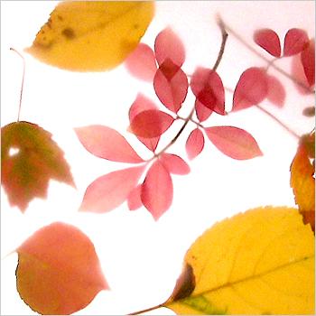 5. It's a leaf motif.