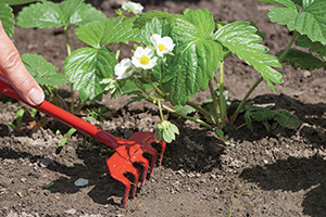 6 ways to win the war on weeds