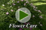 Summer Flower Care