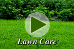 Spring Lawn Care