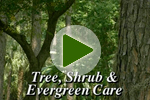 Spring Tree, Shrub & Evergreen Care
