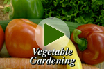 Summer Vegetable Gardening