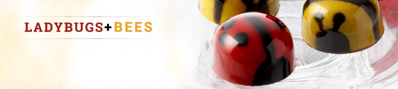 Ladybugs + Bees