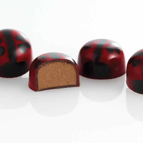 praline ladybugs