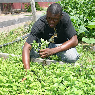 Urban Garden Program Donation