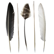 Pointed Quills (pack of 5)