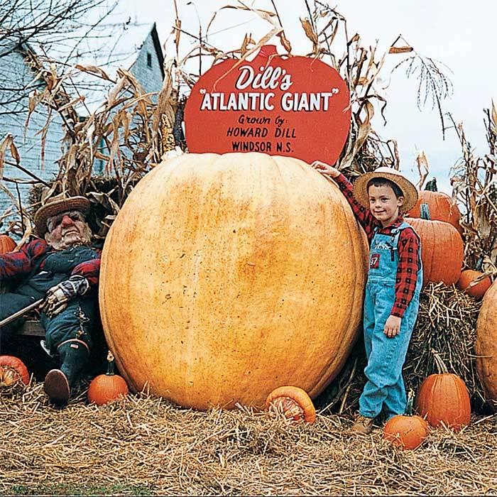 Atlantic Giant Pumpkin Seeds!
