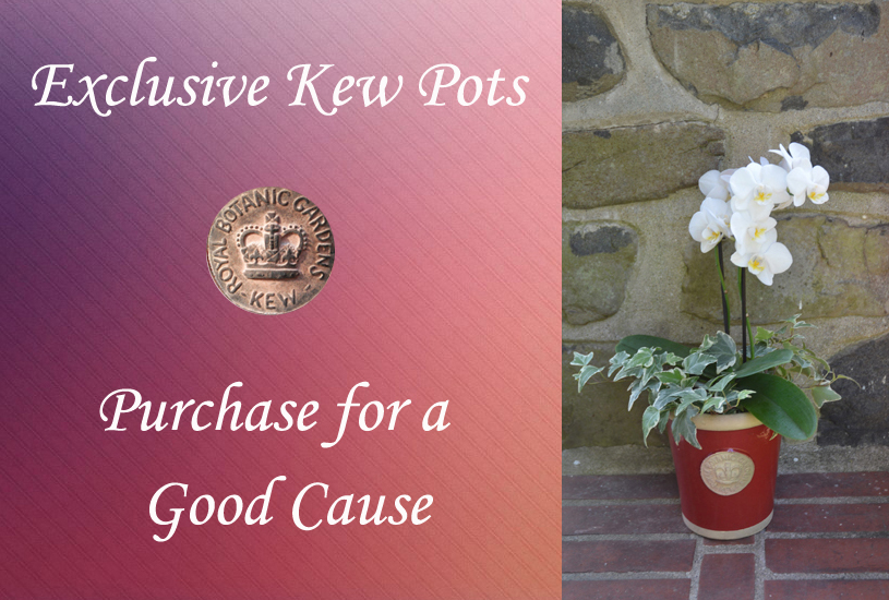 Kew Pot