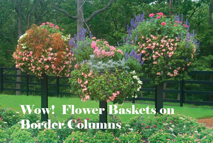 Flower Baskets on Border Columns