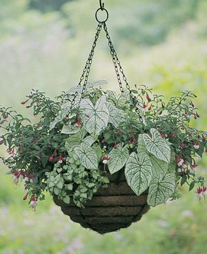 """24"""" Hanging Basket-Euro Classic"""