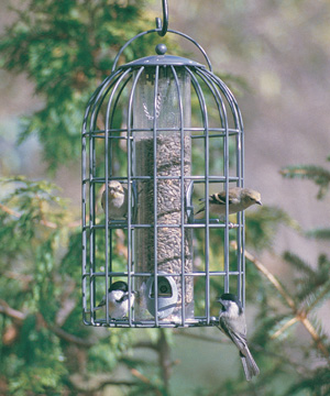 Extra Large Seed Feeder