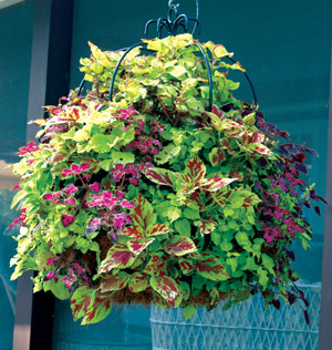 "16"" Double Tier Imperial Hanging Planter"