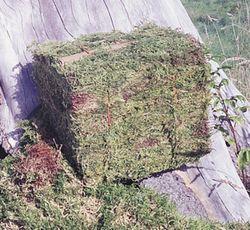 5 Lb. Bale of Oregon Moss