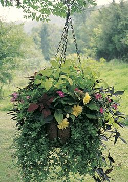 Medium Hanging  Garden w/Coco Liner Set