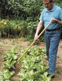 Long Handled Korean Hand Plow