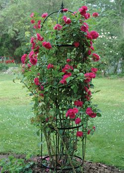 Rose Pillar Obelisk Plant Tower Garden Trellis