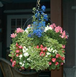 "16"" Single Tier Imperial Hanging Planter"