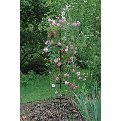 Delicieux Large Rose Pillar Obelisk