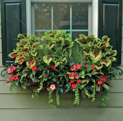 "44"" WINDOW BOX PLANTER & LINER SET"