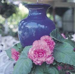 Blue Gloss Down Under Pot