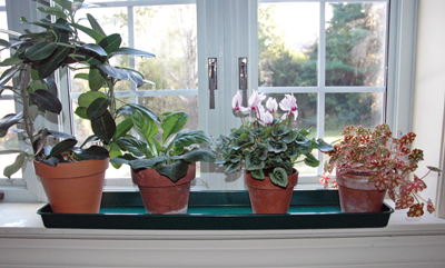 Medium Windowsill Tray