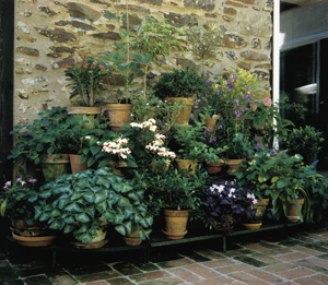 Tiered Plant Stand Combination