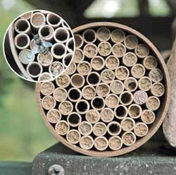 Standard Mason Bee Nest Kit  (55 Tubes)