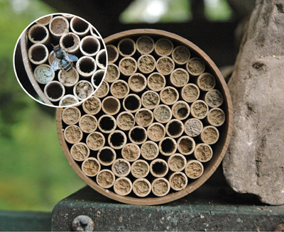 Jumbo Mason Bee Nest Kit (95 Tubes)