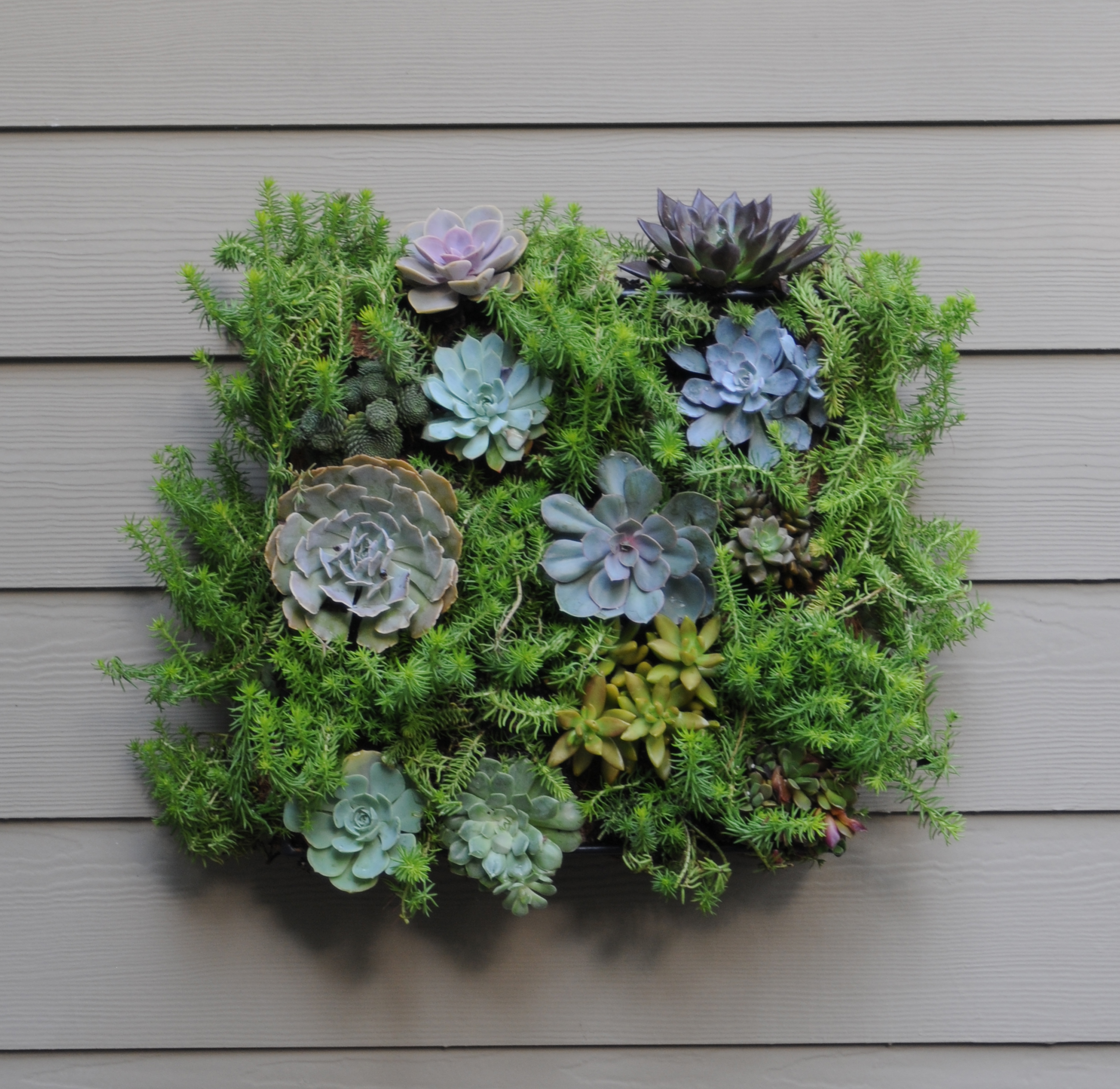 living wall planter living wall planters living wall planter 31079