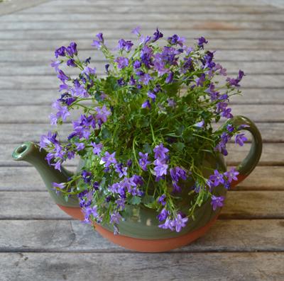 Green Glazed Extra Large Teapot Planter